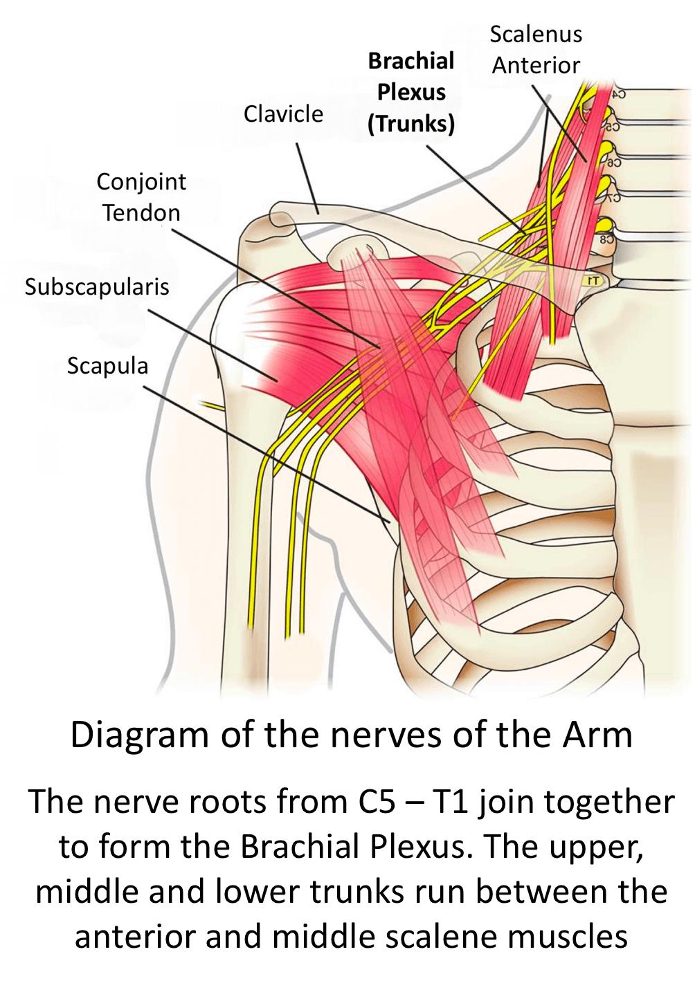 Having an Anaesthetic - Cambridge Shoulder