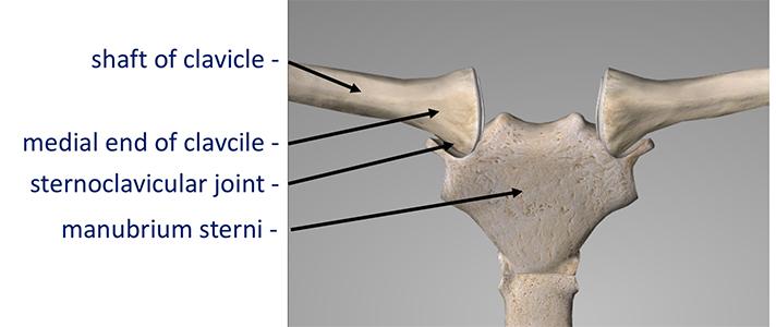 Sternoclavicular - Cambridge Shoulder