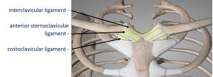 Fig 5. SCJ Ligaments