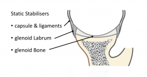 Fig 3. Static Stabilisers - Glenoid, Labrum and Ligaments