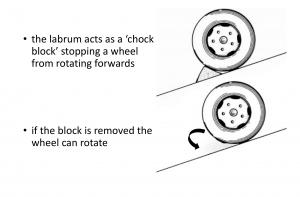 Fig 5. SLAP Chock
