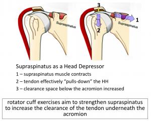 Fig 7. SS as a depressor