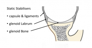 fig_3_static_stabilisers_-_glenoid_labrum_and_ligaments