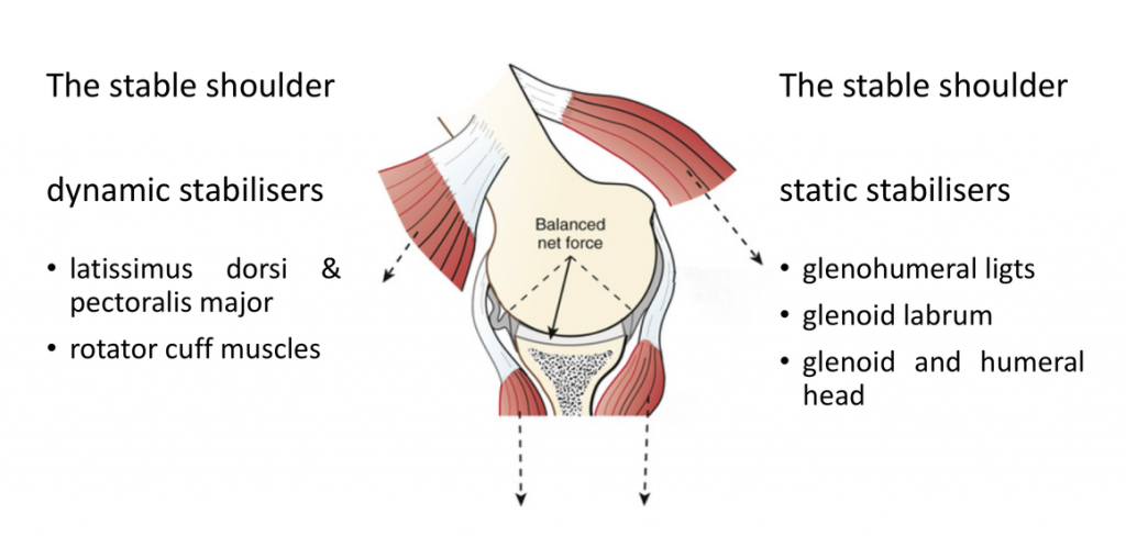 fig_5_the_shoulder_in_equilibrium_-_the_static_&_dynamic_stabilisers